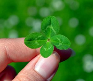 hand holding four leaf clover
